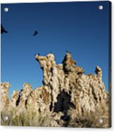 Natural Rock Formation And Wild Birds At Mono Lake, Eastern Sier Acrylic Print