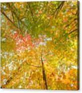 Natures Canopy Of Color Acrylic Print