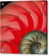 Nautilus Acrylic Print