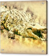 Nile River Crocodile Acrylic Print