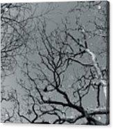oak Acrylic Print