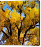 Old Giant  Autumn Cottonwood Orton Acrylic Print