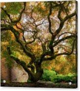 Old Japanese Maple Tree Acrylic Print
