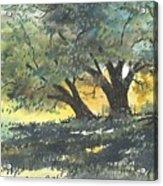 Old Oaks Acrylic Print