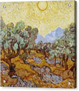 Olive Trees With Yellow Sky And Sun Acrylic Print