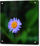One Little Wildflower Acrylic Print