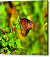 Orange Butterfly Too Acrylic Print