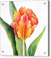 Orange Flame Acrylic Print