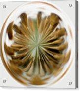 Orb Image Of A Dandelion Acrylic Print