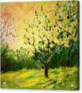 Orchard 45 Acrylic Print