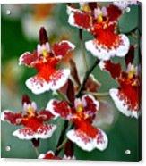 Orchid 34 Acrylic Print