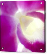 Orchid Abstract Acrylic Print
