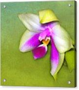 Shy Orchid  Acrylic Print