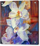 Orchids Behind Glass Acrylic Print