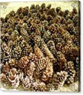 Organize Pinecones Acrylic Print