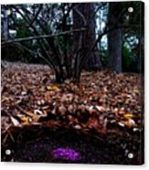 Organize Purple Berries Acrylic Print