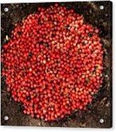 Organize Red Berries Acrylic Print