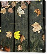 Original Autumn Foliage Acrylic Print