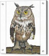 Owl In Pose Acrylic Print