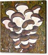Oyster Mushroom Acrylic Print