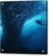 Palau, Diving Acrylic Print by Dave Fleetham - Printscapes