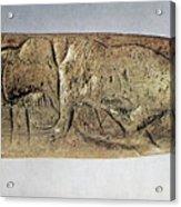 Paleolithic Tool Acrylic Print