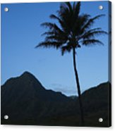 Palm And Blue Sky Acrylic Print