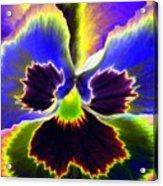 Pansy Power 87 Acrylic Print