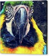 Parrot Art  Acrylic Print