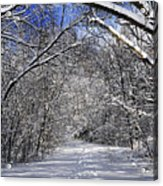 Path In Winter Forest Acrylic Print