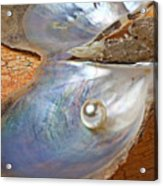Pearl In Oyster Shell Acrylic Print by Garry Gay