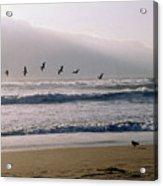 Pelican Brief Acrylic Print