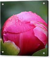 Buttoned Up Acrylic Print