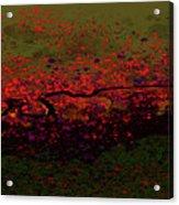 Petal Blast Acrylic Print