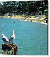 Pilot Bay Beach 4 - Mount Maunganui Tauranga New Zealand Acrylic Print