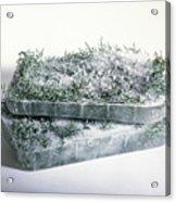 Pine Twigs And Ice Acrylic Print