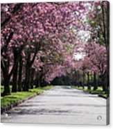 Pink Blooming Trees Acrylic Print