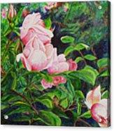 Pink Cascade Acrylic Print