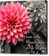 Pink Dahlia With John Lennon Quote Acrylic Print