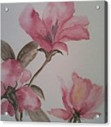 Pink Floral Acrylic Print by Ginny Youngblood