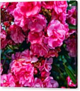 Pink Flowers Green Leaves Acrylic Print