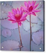 Pink Lily Blossom Acrylic Print