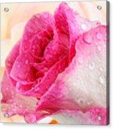 Pink Acrylic Print by Mark Johnson