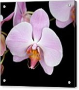 Pink Orchid Vii Acrylic Print