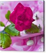 Pink Rose 5 Acrylic Print