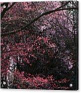 Pink Trees Acrylic Print