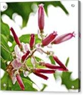 Pink Tropical Flower In Huntington Botanical Garden In San Marino-california Acrylic Print