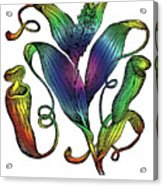 Pitcher Plant Acrylic Print by Eric Edelman