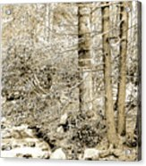 Pocono Mountain Stream, Pennsylvania, Digital Art Acrylic Print