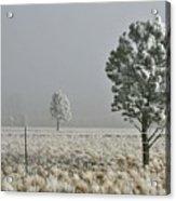 Pogonip Frosty Morning Acrylic Print